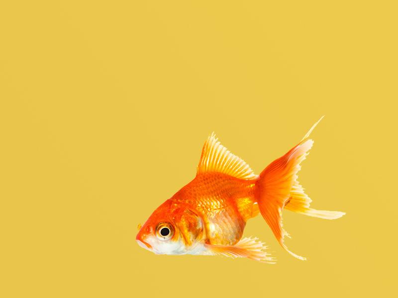 Slide Boldfish
